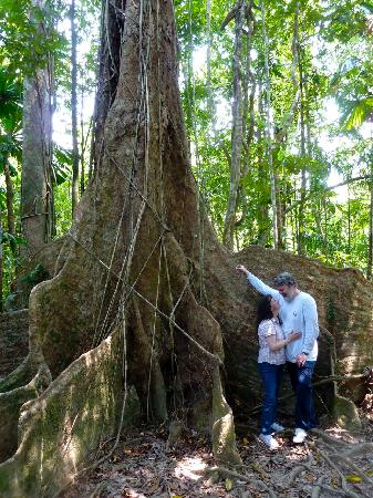 Heritage & Interpretive Tours: Mahogony Tree - Scale!