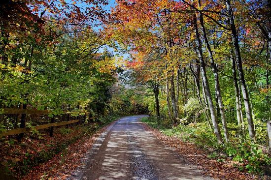 Wilderness Road Canaan Valley ForestWander.com