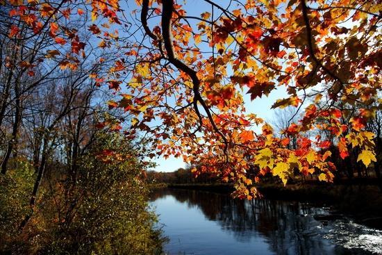 Blackwater River Canaan Valley ForestWander.com