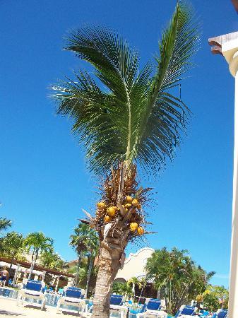 Paradisus Princesa del Mar Resort & Spa: by the pool