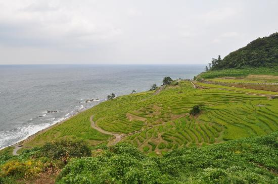 Wajima, Japón: 田んぼ