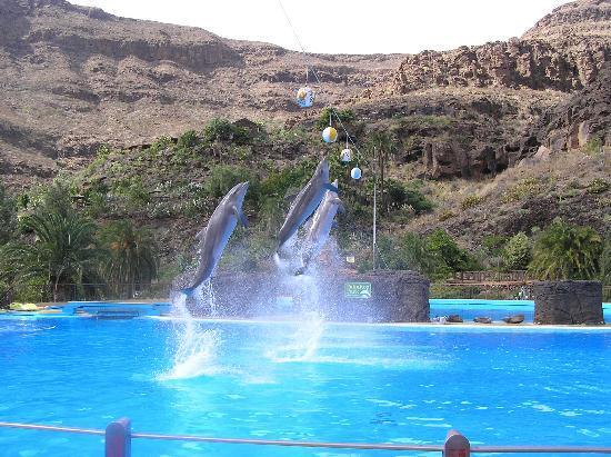 Puerto Rico, إسبانيا: Шоу дельфинов в Палмитос Парк