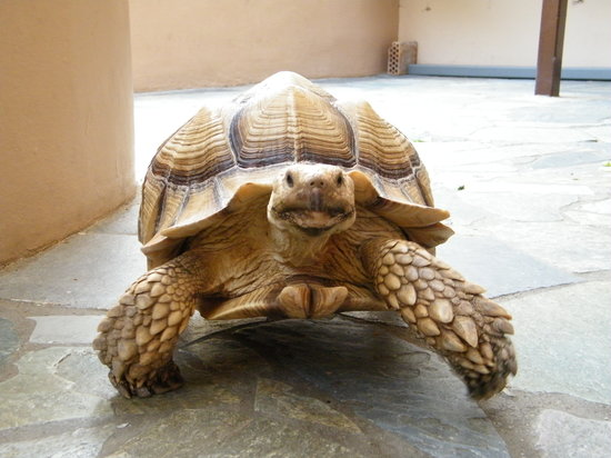 Aquaworld Aquarium & Reptile Rescue Centre: Sommige dieren lopen er 'los' rond, zoals Blondie