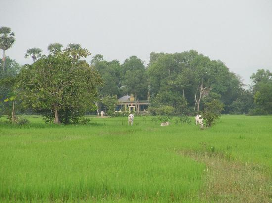 Meas Family Homestay: View over neighbouring fields