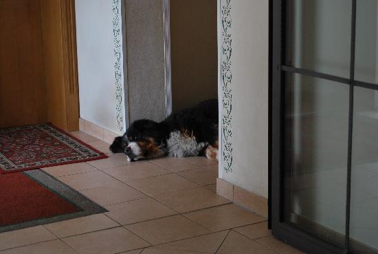 "Gasthof Kroell: ""Wachhund"