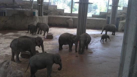 Koelner Zoo : Elefanten im Kölner Zoo innen