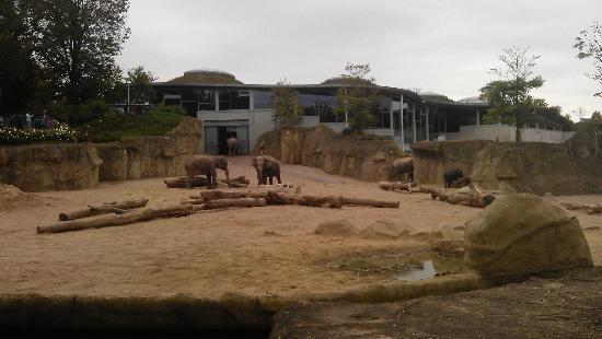 Koelner Zoo : Elefanten im Kölner Zoo aussen