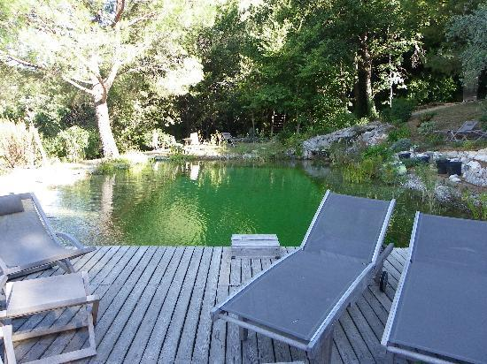 Orion B&B : la piscine naturelle