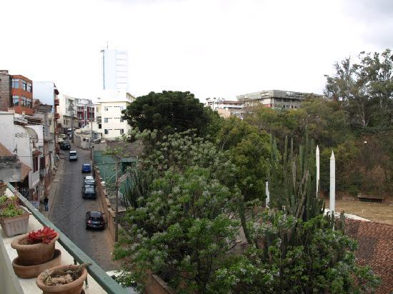 Tana-Jacaranda : Blick von der oberen Terasse nach oben.