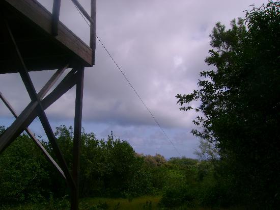 Big Island Eco Adventures II Zipline Canopy Tour: Zipline