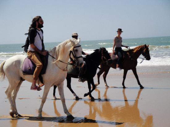 Le Douar des Arganiers : horse riding