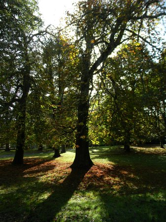 Irish Agricultural Museum & Johnstown Castle Gardens: autumn glory