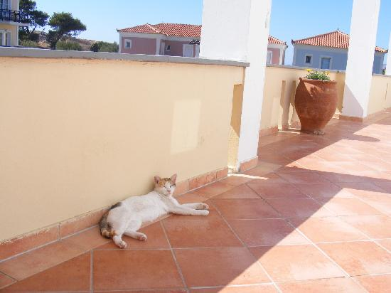Panselinos Hotel Apartments: Our little pet for the week, such a sweetie