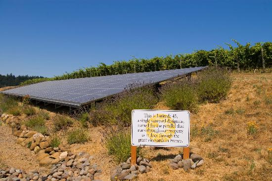 Left Coast Cellars : Situated on the 45th parallel