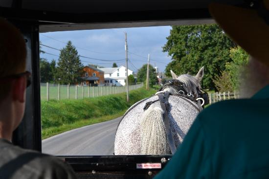 Frogtown Acres Bed and Breakfast: Our buggy ride