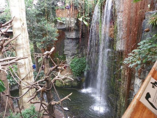 Омаха, Небраска: The Lied Jungle