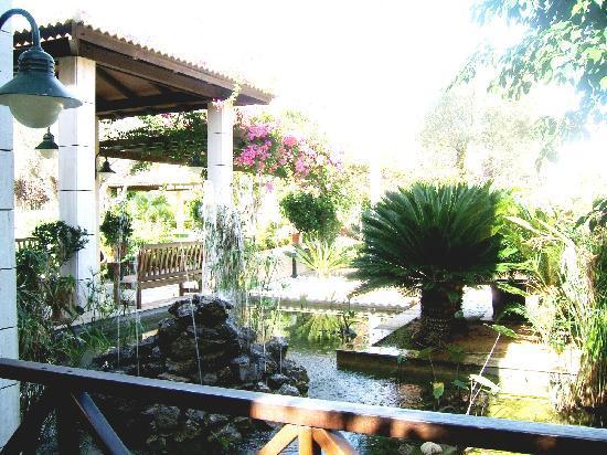 Aparthotel Playa Mar & Spa: Fish pool