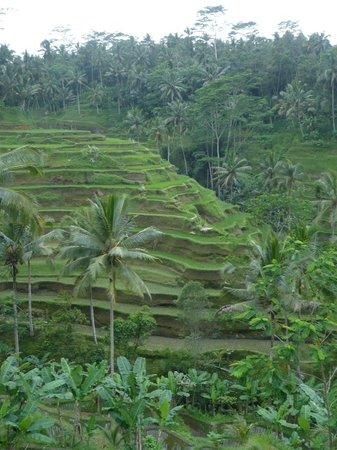 Bali Viaje - Tur Harian