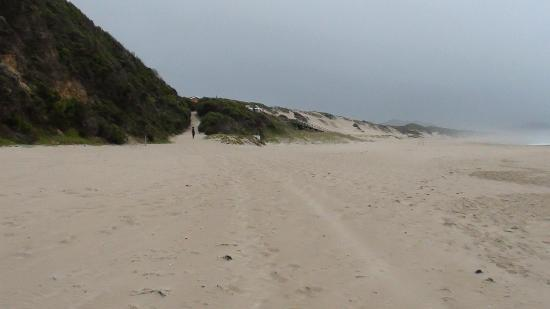Gerickes Point : I could write a book about this awesome beach !