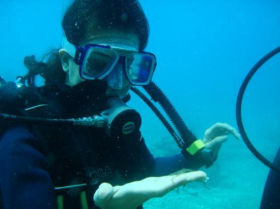 Deadsea Adventure Camp: denizyıldızı