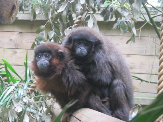 Shaldon Wildlife Trust: More friendly monkeys (by the steep slope)