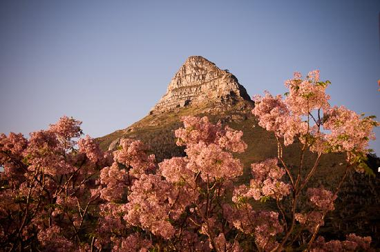 Boutique @ 10: View over the syringa tree of Lion's Head from the deck