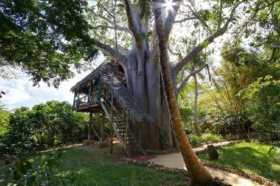Wyspa Mafia, Tanzania: One of our unique treehouses