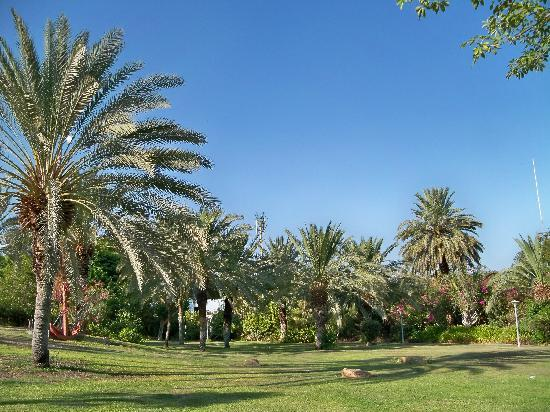 Kalia Guest House: 9. Beautiful garden at Kibbutz Kalya!