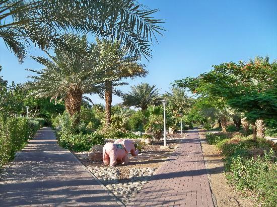 Kalia Guest House: 10. Beautiful garden at Kibbutz Kalya.