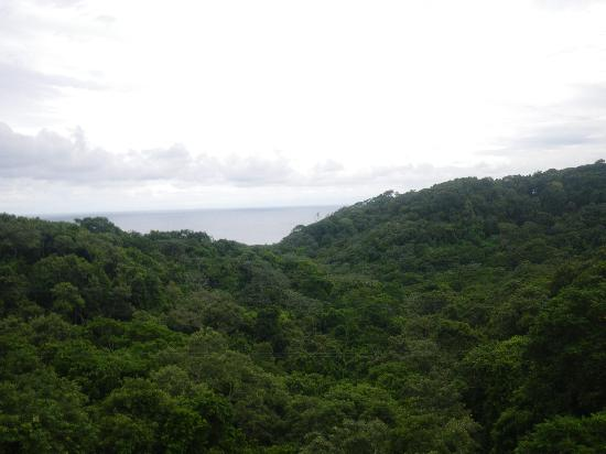 Infinity Bay Spa and Beach Resort: South Shore Zip Lining...view from the canopy.