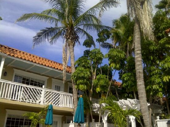 Tortuga Beach Resort: Beautiful palm trees at the front pool
