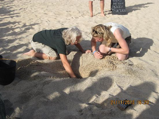 Turtle SOS : Excavating the nest