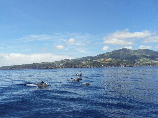 Quinta dos Bravos: Beauté de la mer