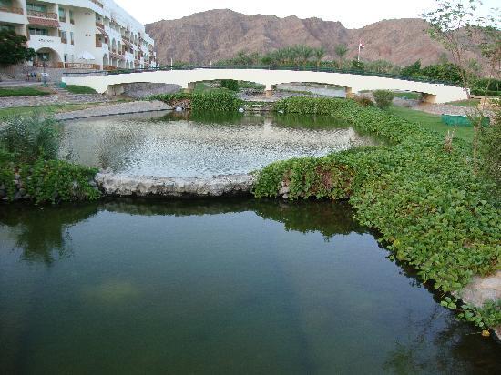 Movenpick Resort Taba Hotel : небольшое озеро