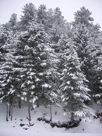 Hotel Lo Sciatore : il bosco 2