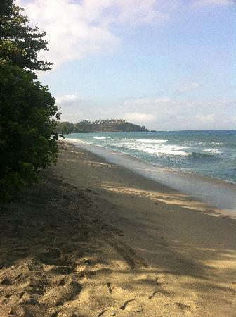 ฮอลิเดย์ รีสอร์ท ลอมบอก: The beach at the hotel