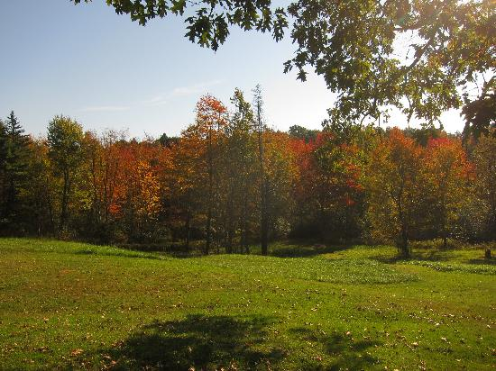 Howard House Lodge B&B: Fall foliage - from the lodge area.