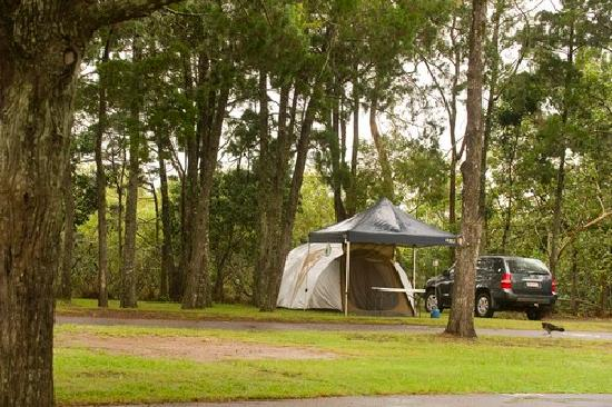 North Coast Holiday Parks Terrace Reserve: Terrace Reserve Holiday Park