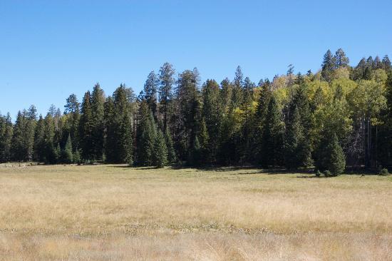 Hannagan Meadow Lodge: Hannagan meadow across the road