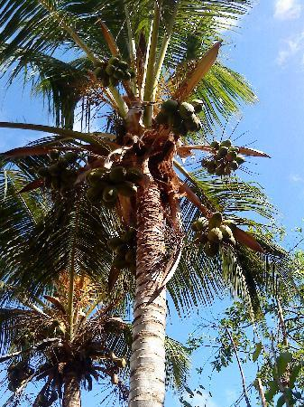 Subira House: Palmtrees and growth everywhere