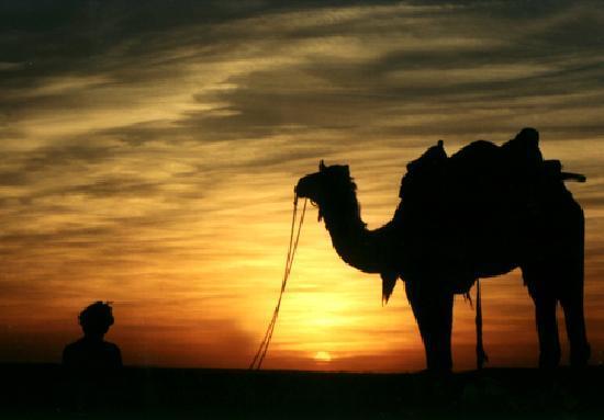Hotel Moonlight Jaisalmer: Camel Riding at Sand Dunes