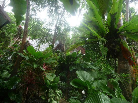Khao Sok Las Orquideas Resort: Fast im Dschungel
