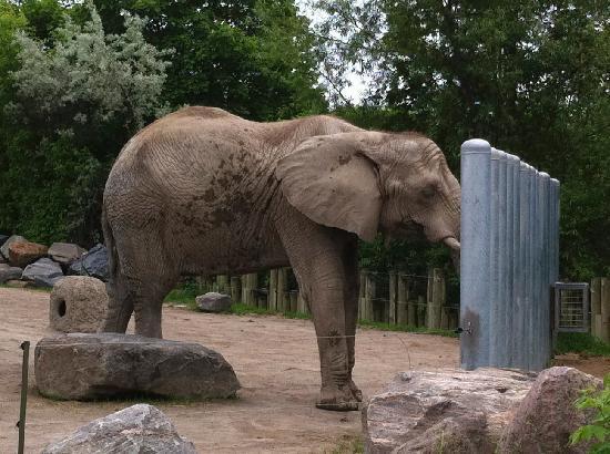 Toronto Zoo: Elepant