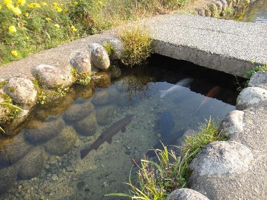 The Historic Villages of Shirakawa-go Traditional Houses in the Gassho Style: Clear water in the village