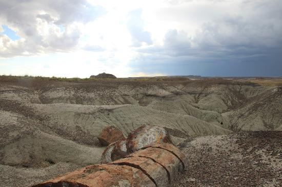 Globetrotter Lodge: Petrified Forest