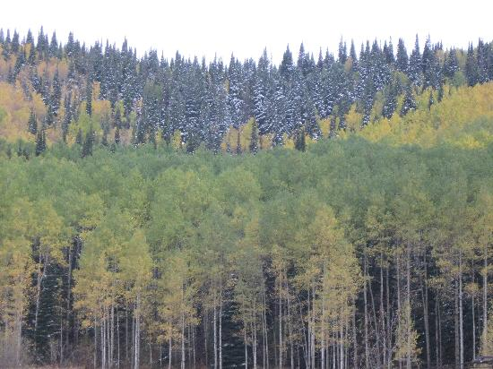 Wyndham Vacation Resorts Steamboat Springs: Trees changing colors