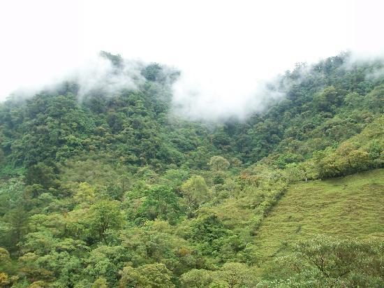Hotel Quelitales: Ardecer con bosque nuboso