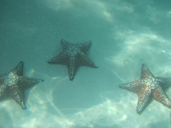 Isla Saona: fondo del mar