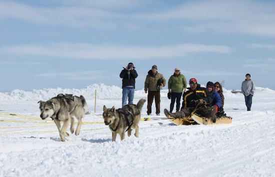 Arviat, Canadá: Dog sledding