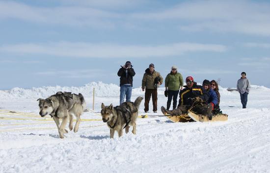 Arviat, كندا: Dog sledding